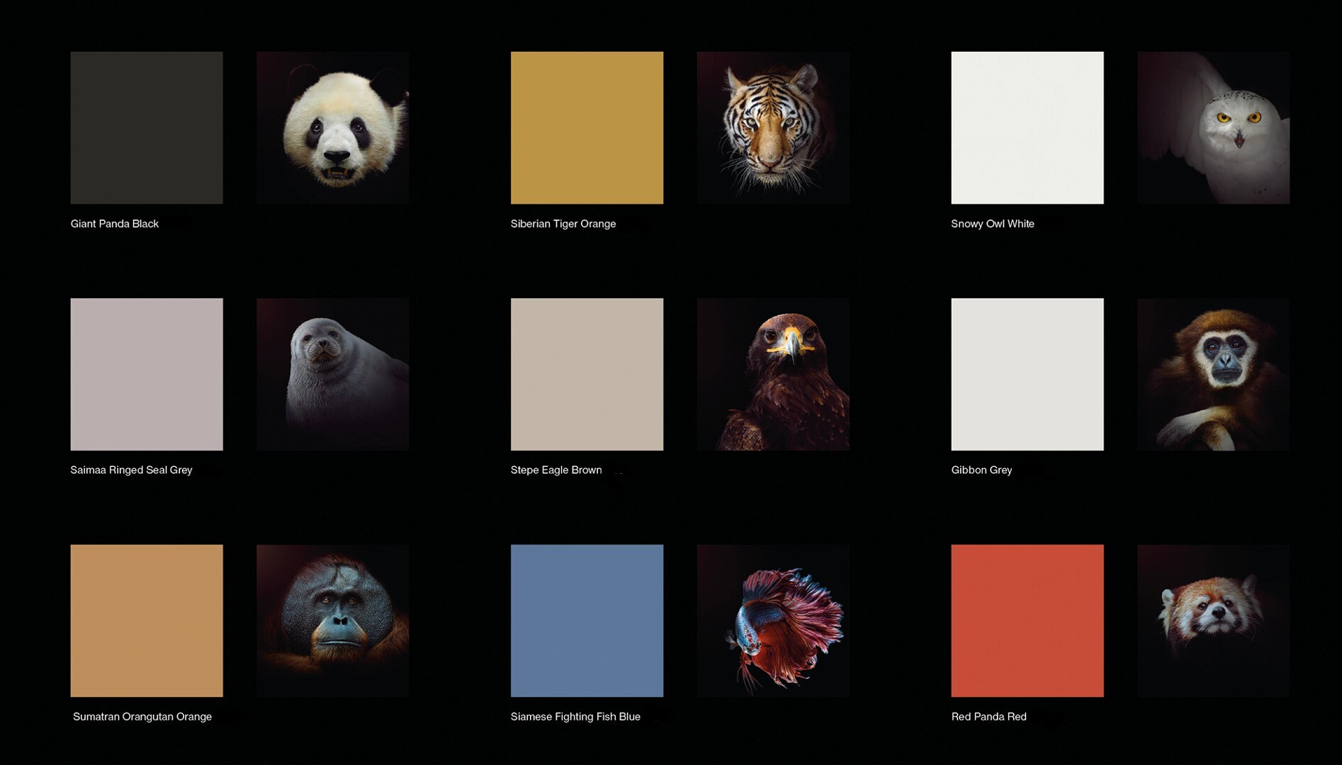 endangered colours